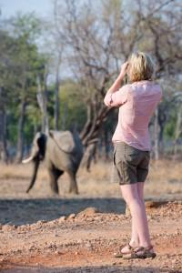 Nick-Mackman-elephant
