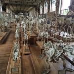 Skeleton-Nick-Mackman