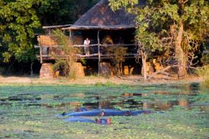 mfuwe lodge zambia