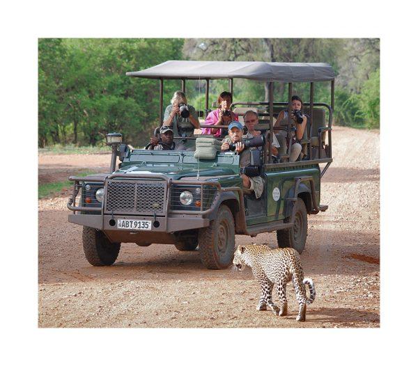 Art Safari Workshops Intro