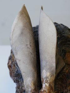 Hare Sculpture Ears