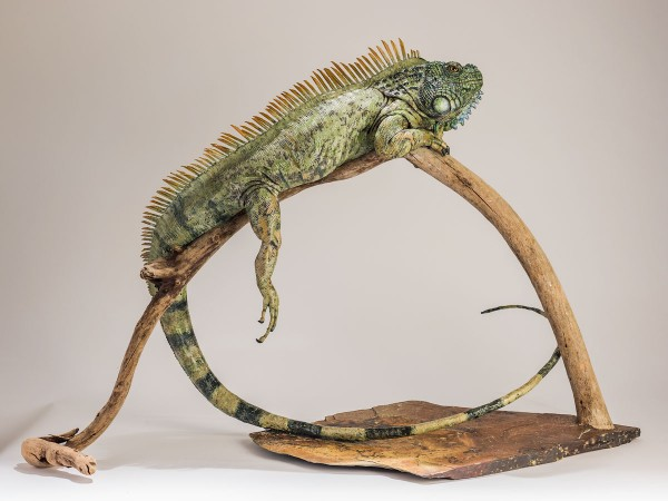 Iguana Sculpture by Nick Mackman