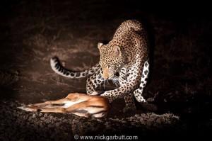 Leopard sculpture