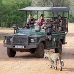 leopard safari