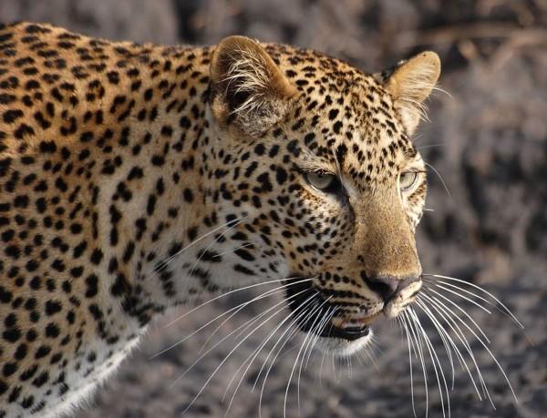Nick Mackman Art Safari