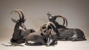 Sable Antelope Sculpture