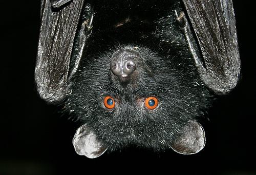 fruit bat sculpture
