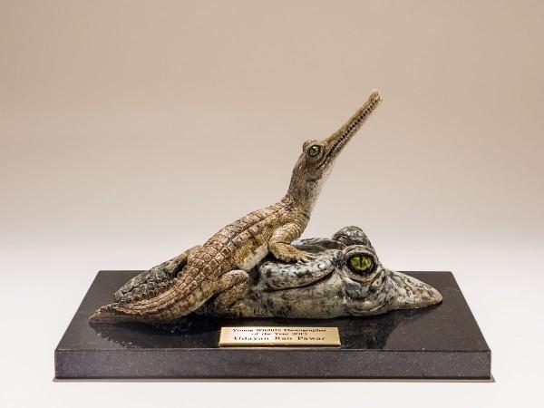 Nick Mackman Wildlife Trophy