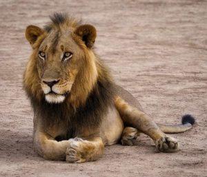 Zambia Wildlife Safari