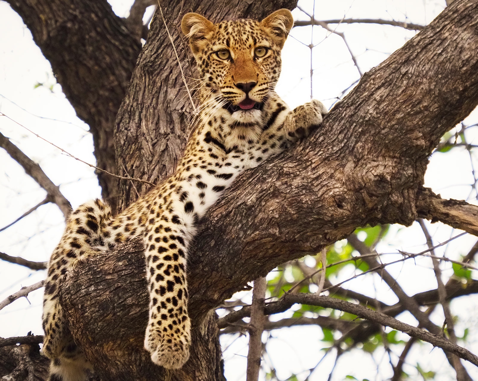Zambia Art Safari