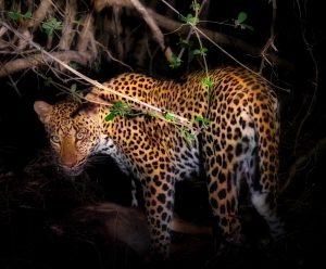 Zambia Animal Sculpture
